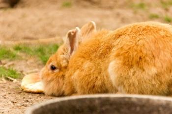Biggis Jodlerstübchen - Kaninchen