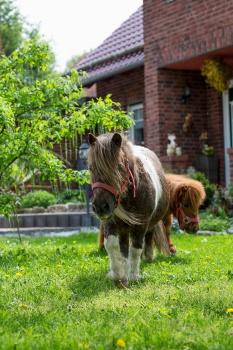 Biggis Jodlerstübchen - Ponys